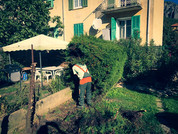 palm_azur-jardinier-cote_azur-13.jpg