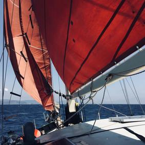 papagei-sailing-4.jpg