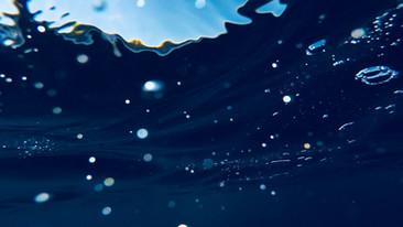 papagei-water-1.jpg