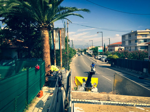 palm_azur-elagage-cote_azur-01.jpg