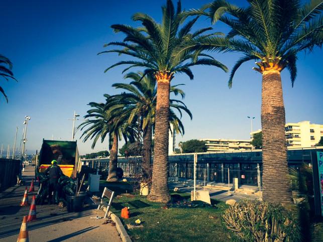 palm_azur-elagage-cote_azur-09.jpg