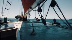 papagei-sailing-1.jpg