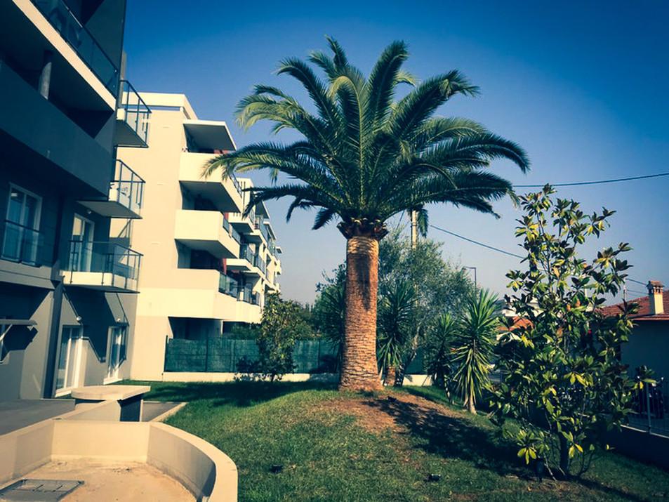 palm_azur-elagage-cote_azur-06.jpg