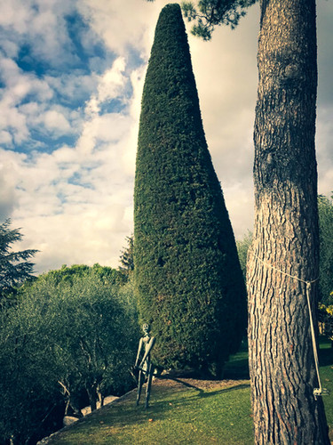 palm_azur-taille-cote_azur-04.jpg