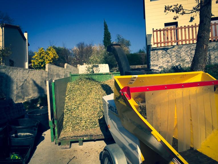 palm_azur-jardinier-cote_azur-04.jpg