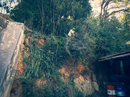 palm_azur-jardinier-cote_azur-07.jpg