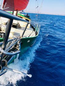 papagei-sailing2.jpg