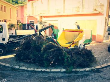 palm_azur-jardinier-cote_azur-12.jpg