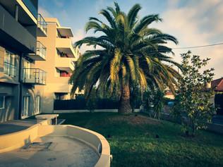 palm_azur-elagage-cote_azur-07.jpg