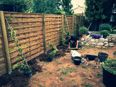 palm_azur-jardinier-cote_azur-06.jpg
