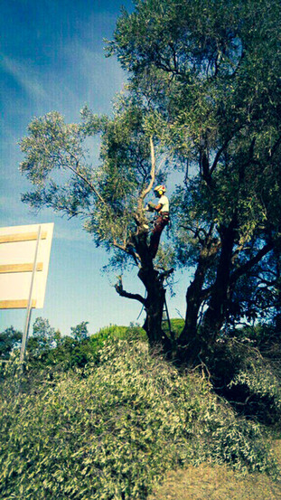 palm_azur-elagage-cote_azur-08.jpg