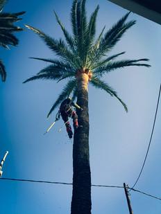 palm_azur-elagage-cote_azur-10.jpg