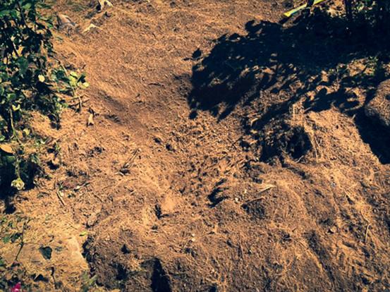palm_azur-dessouchage-cote_azur-05.jpg