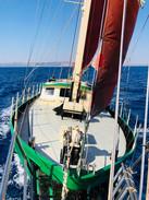 papagei-sailing.jpg