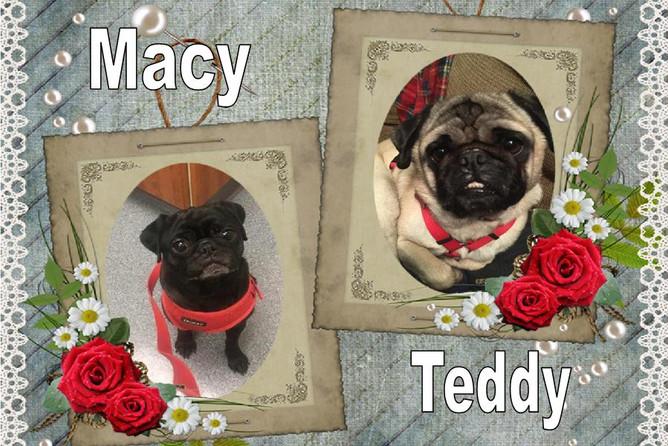macy teddy (1).jpg