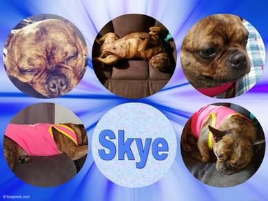 skyepizap.com15529304282811.jpg