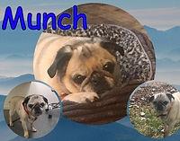 munchpizapweb_edited.jpg