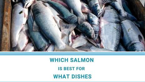 6 Salmon varieties explained