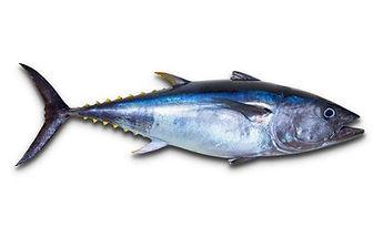 tonijn heel.jpg