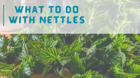 How to prepare Nettles