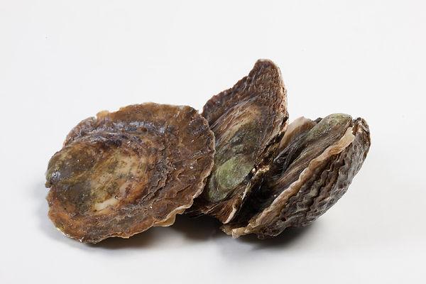 oesters zeeuwse-platte.jpg