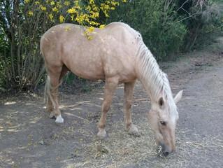 Horses disease is a no for a non profit