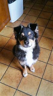 éducateur canin 37 à domicile
