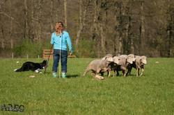concours troupeau