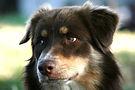 éducatrice canin manon falquet