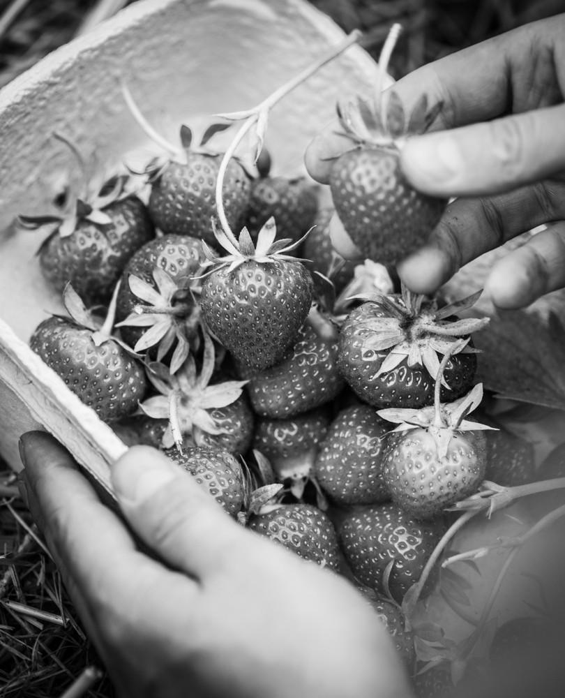 Erdbeeren_Schale-1059.jpg