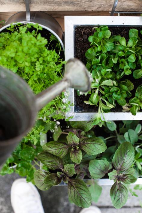 Pflanzen_von_oben_1262.jpg