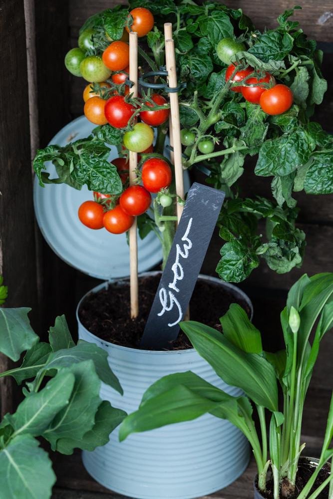 Tomaten_0144.jpg
