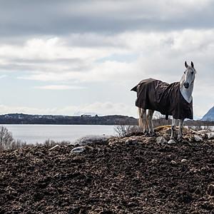 Norja, hevosvideot