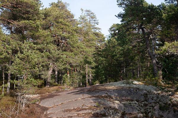 Porkkala_pienet-3.jpg