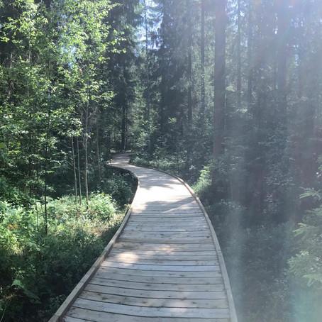 Voiko metsä olla terveysmetsä ilman kävijöitään?