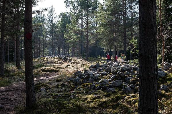 Porkkala_pienet-1.jpg