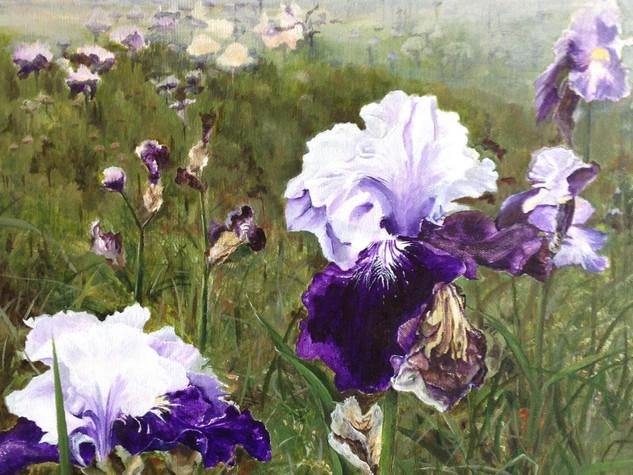 Iris of Banta Road