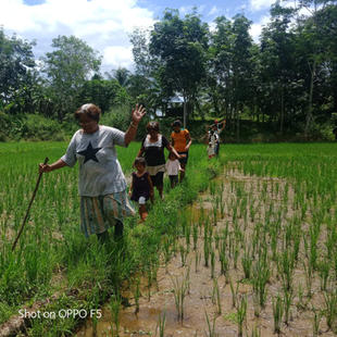 Tribal church leaders in Agusan del Sur (Mindanao, Philippines) walk across rice fields to minister to neighbors.