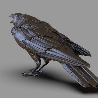 crow1.237.jpg