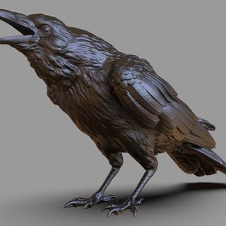 crow1.236.jpg