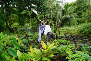 Healing Adventures on the Big Island of Hawai'i and Holistic Living Research.