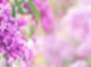 Adobe-lilacs.jpeg