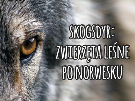 Skogsdyr: zwierzęta leśne po norwesku