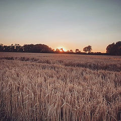 Sunsets and Corn Fields 🌅🌠 #norfolk #r