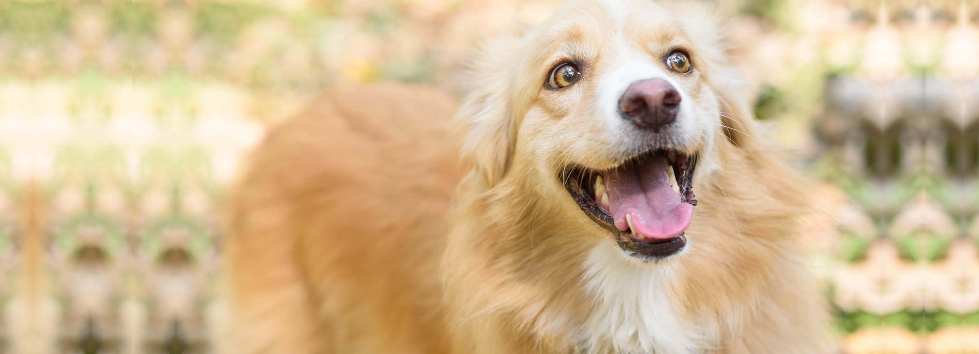 Dental Happy dog.jpg