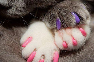 The Paw Project8.jpg