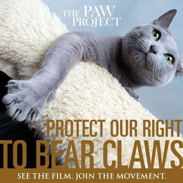The Paw Project3.jpg