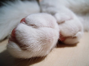The Paw Project4.jpg