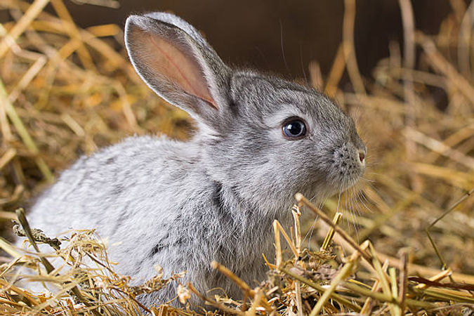 Rabbit on Straw.jpg