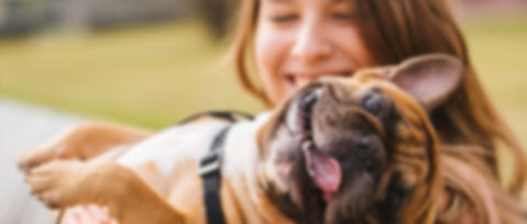 Pet insurance 4.jpg